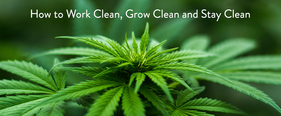 Webinar: How to Work Clean, Grow Clean and Stay Clean in the Cannabis Industry